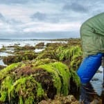 Watch the short documentary about Wild Irish Sea Weed. Quilty, Co.Clare.
