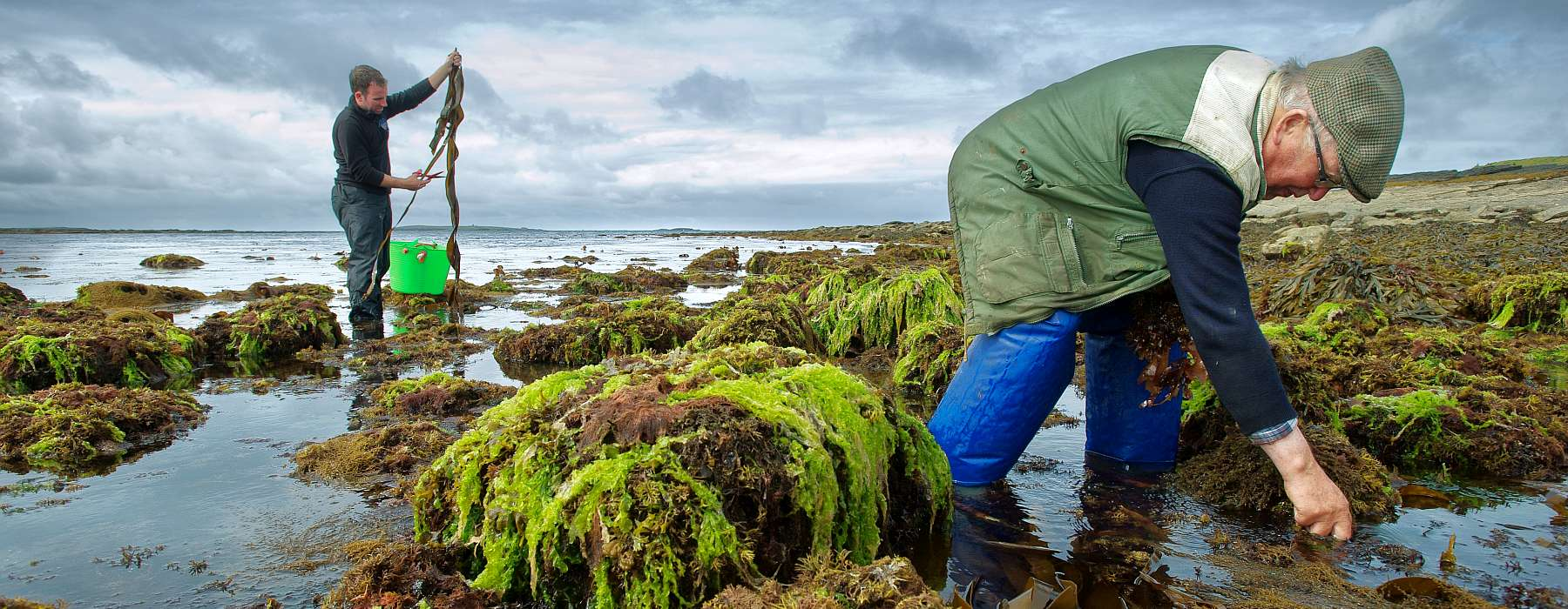 Watch the short documentary about Wild Irish Seaweed. Quilty, Co.Clare.