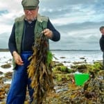 The Talty family have hand harvested seaweeds for four generations