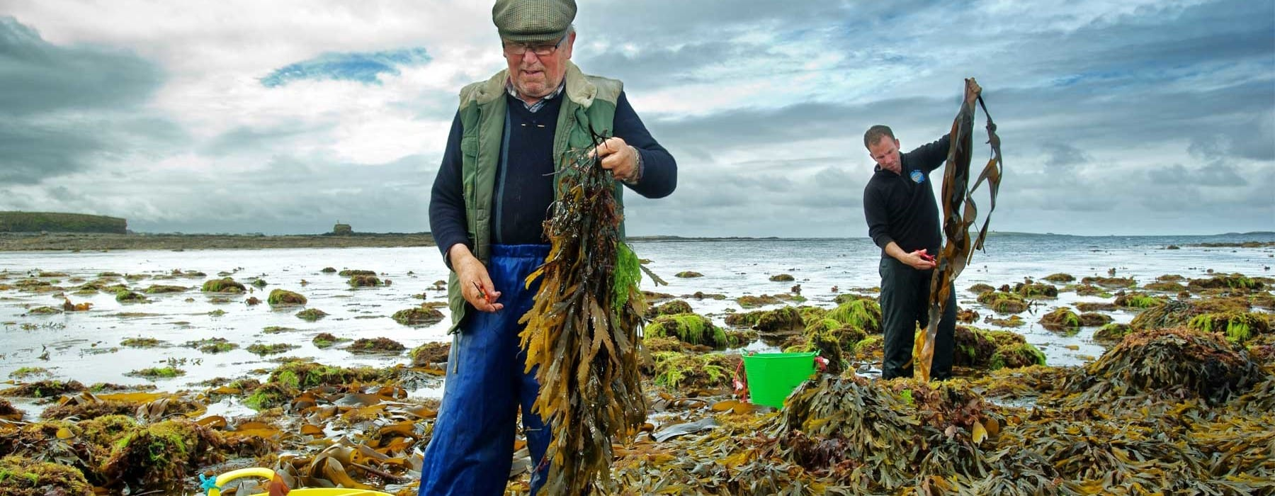 The Best of Irish experiences with Wild Irish Sea Veg  on the beautiful coastline of County Clare