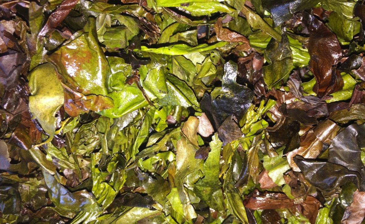 Wild Irish Sea Veg Dillisk Dulse Crisps Recipe Organic Irish Seaweed