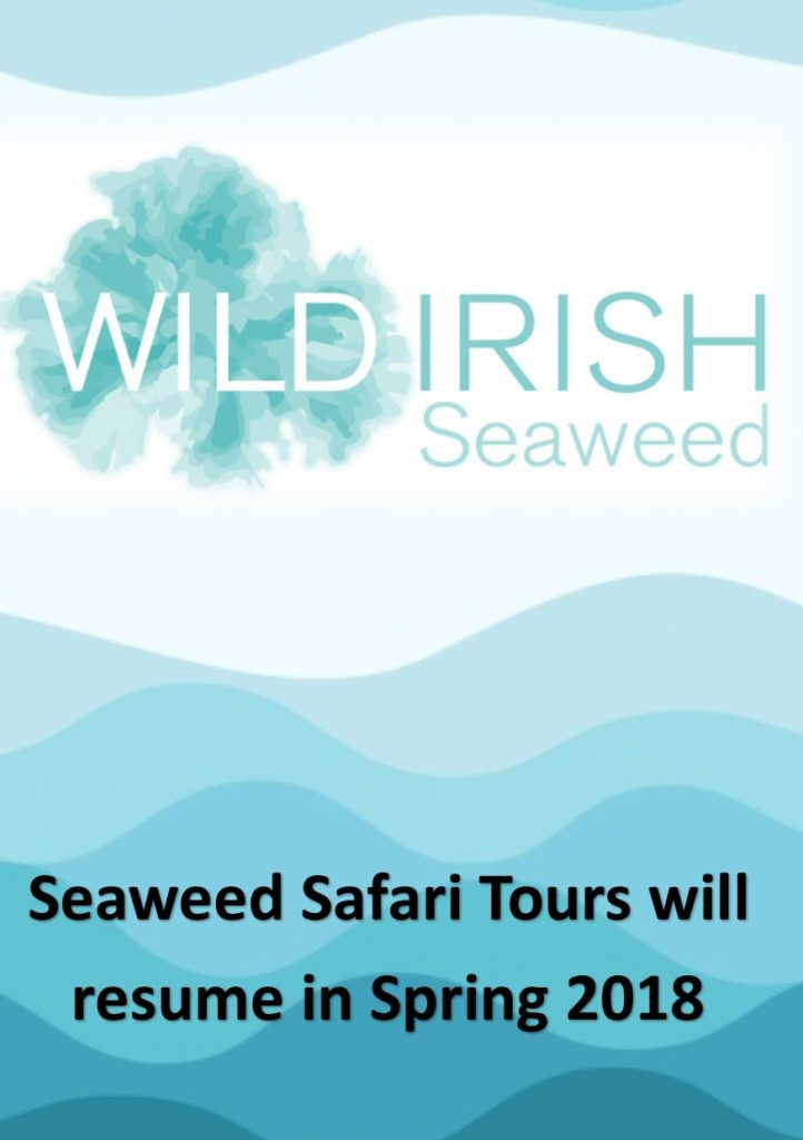 Seaweed Safari Tour